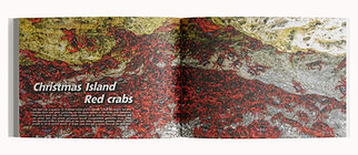 Book_Mockup_7-CI_Red_crabs_spread.jpg