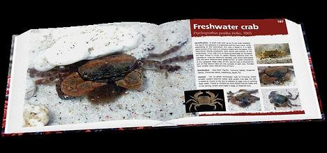 Christmas Island crabs, crabs, Christmas Island, freshwater crab