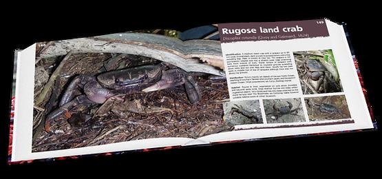 Rugose land crab, Christmas Island crabs