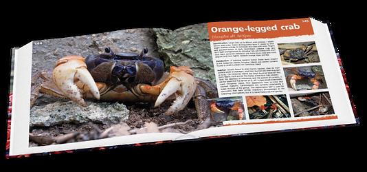 Orange-legged crab, Christmas Island crabs