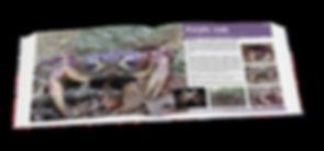 Purple crab, Christmas Island crabs