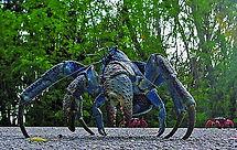 Christmas Island crabs,Robber crab, Birgus latro, anomuran crab walking