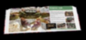 Christmas Island crabs, crab, Christmas Island, grapsus crab