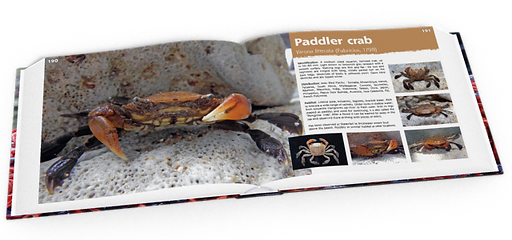 Paddler crab, crabs, Christmas Island crabs