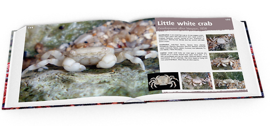 Little white crab, crabs, Christmas Island crabs