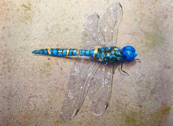 """Dragonfly Blue"""