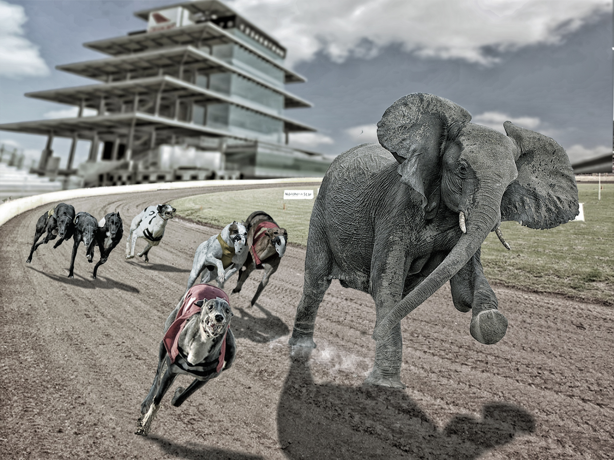 Elephant greyhound race  v1