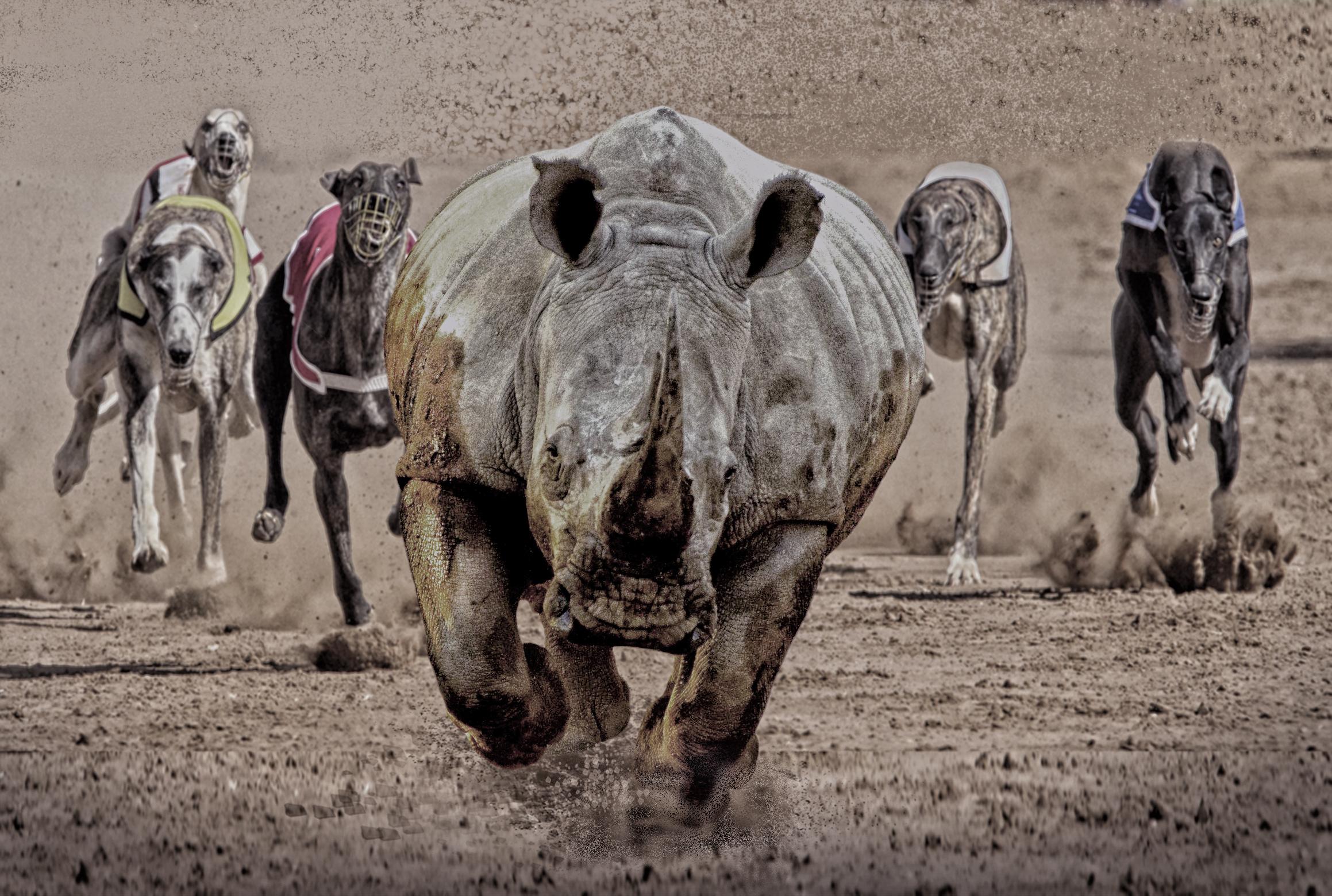 rhino race