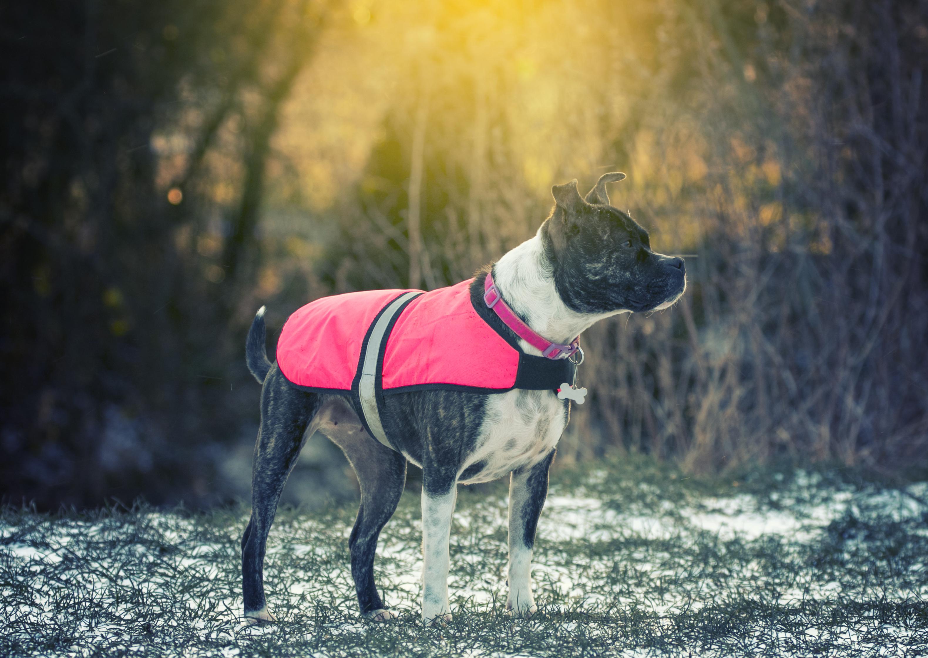 Dog in park 2
