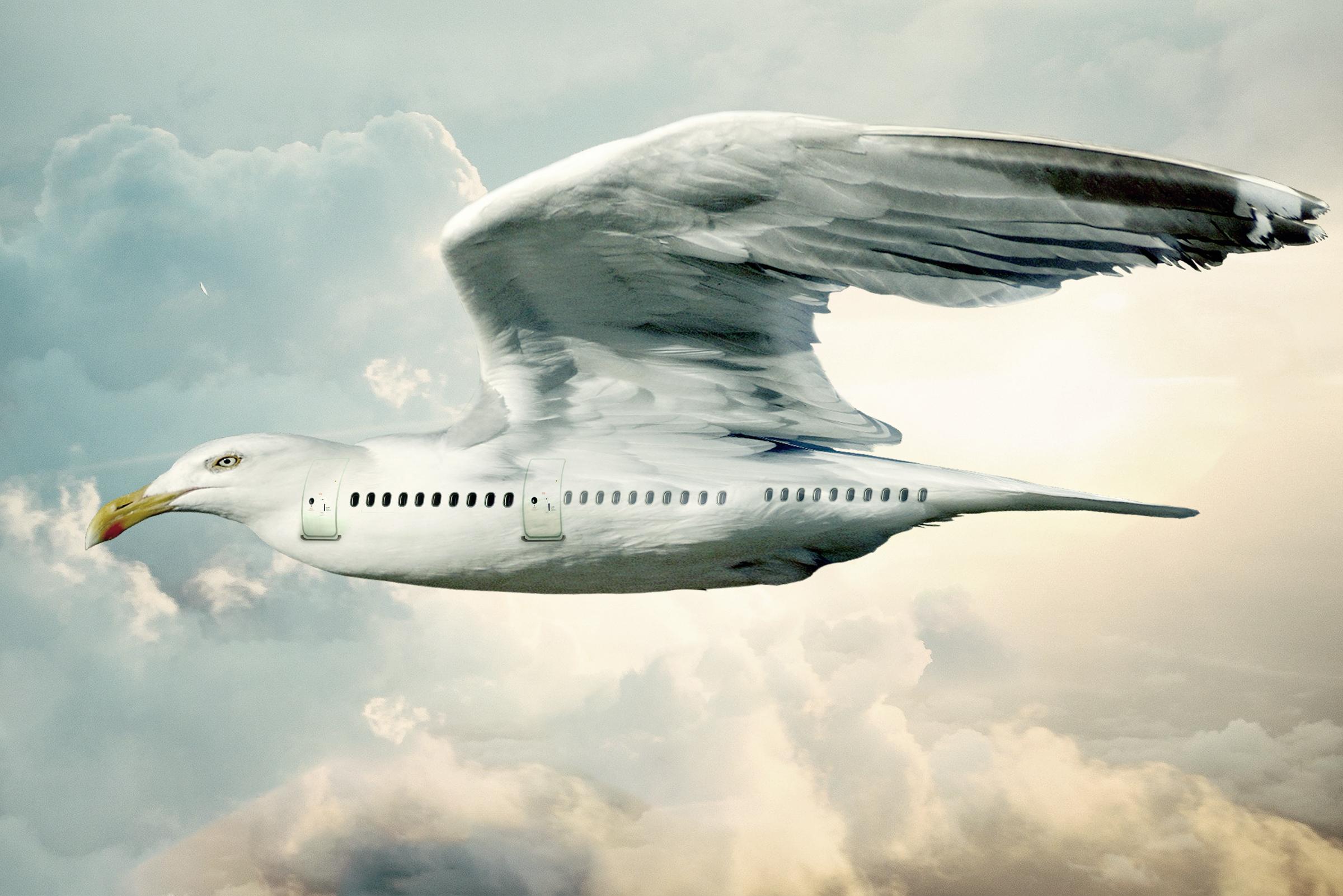 Bird plane