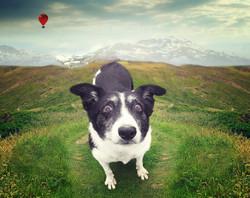 Jessie in the hills
