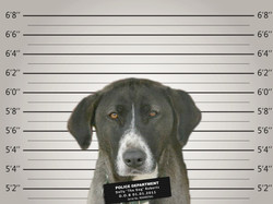 Dolly's Mug Shot police