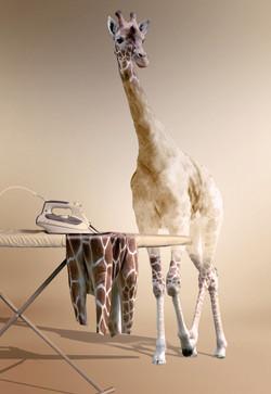 Giraffe ironing