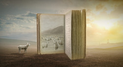Sheep book field v1