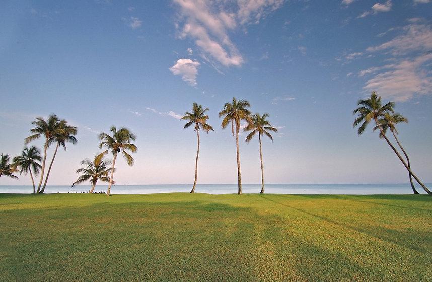 Gulf waterfront lawn and palms, Florida.