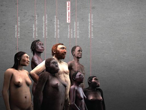 Từ Sahelanthropus đến Homo Sapiens: Tổ tiên của loài người trông như thế nào?