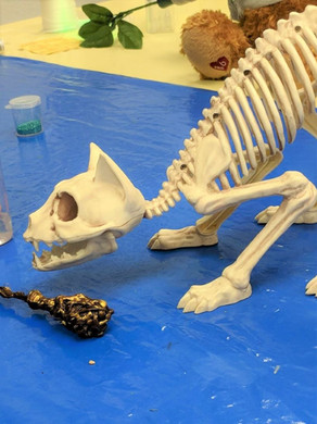 Cat skeleton and a wand