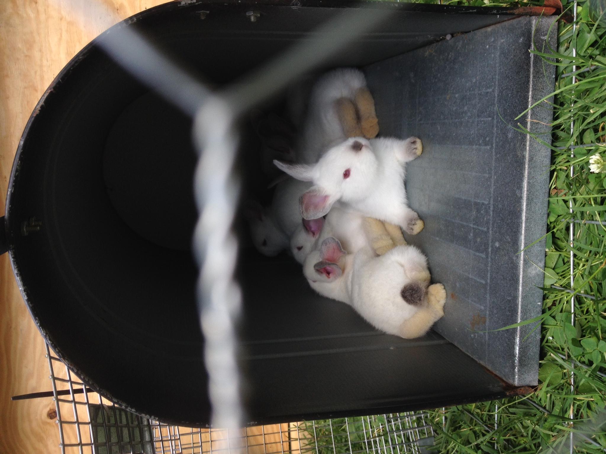 Bunnies In a Mailbox