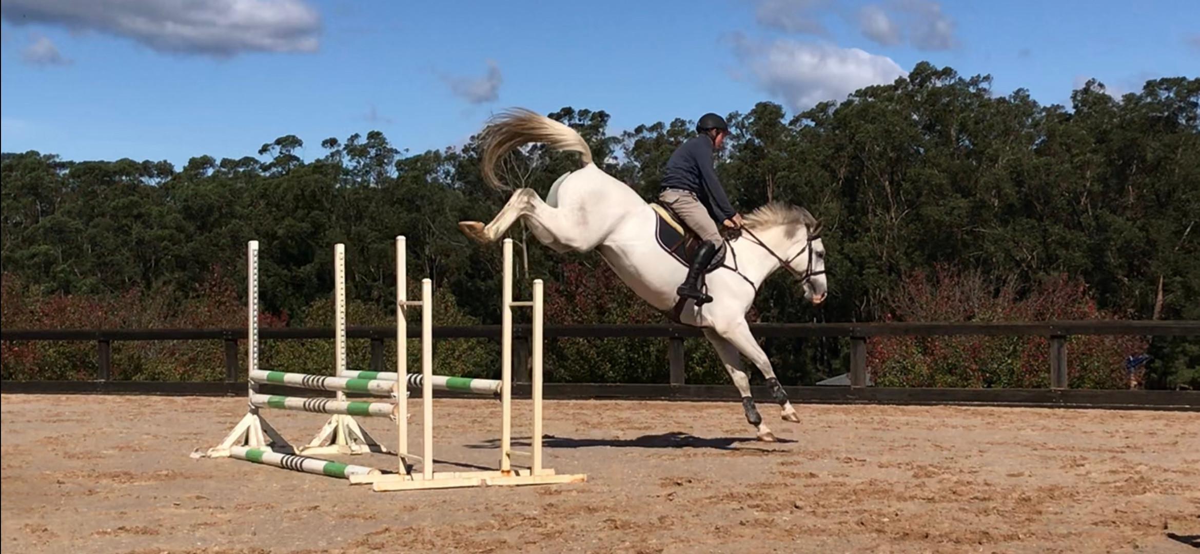 Kerm and talented 4 year old stallion 'Jon Snow'