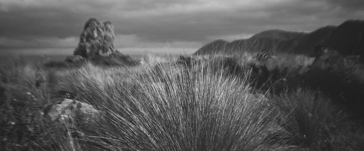 South Wellington