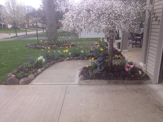 Spring cleanup services