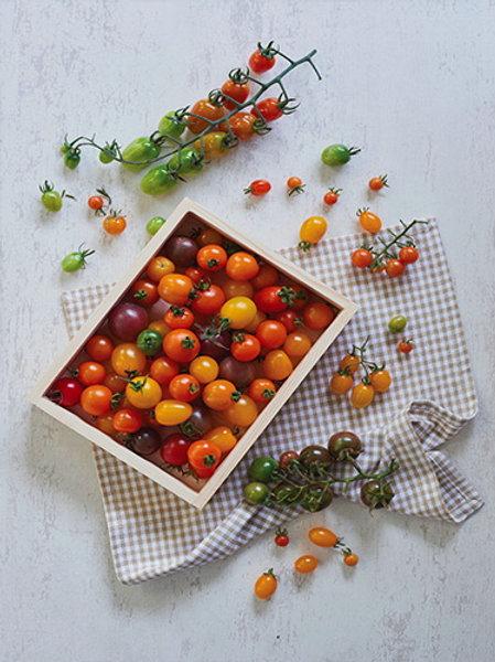 Fancy Cherry Tomato on Vine (มะเขือเทศแฟนซี)