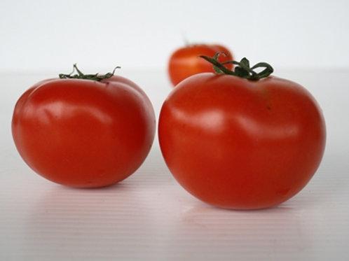 Giant Tomato (มะเขือเทศดอยคำจัมโบ้)