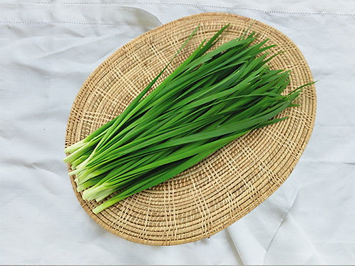 Green Chinese Chives (กุยช่ายเขียว)