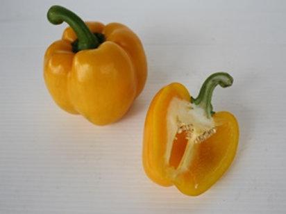 Capsicum Yellow (พริกหวานเหลือง)
