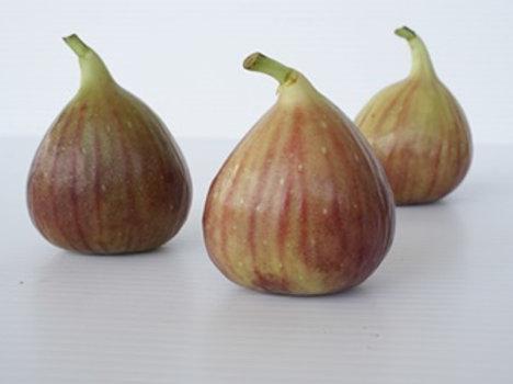 Fig (มะเดื่อฝรั่ง)