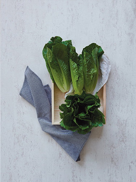 Cos Lettuce / Romaine Lettuce (คอสสลัด / ผักกาดหวาน)