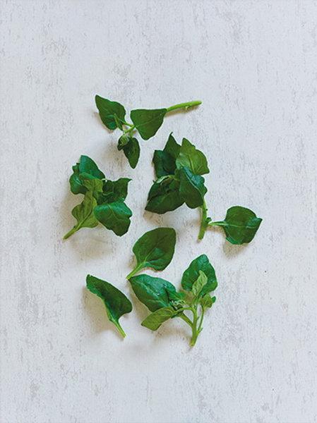 Spinach New Zealand (ปวยเหล็งนิวซีแลนด์)