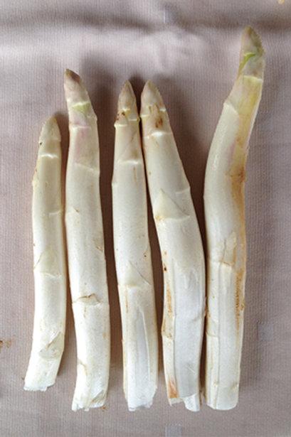 White Asparagus (แอสพารากัสขาว)