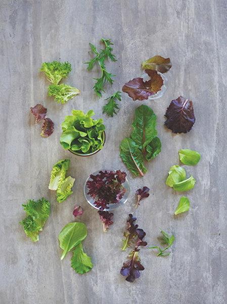 Mixed Salad (สลัดรวม)