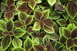 Tokyo Plants
