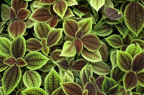 Tokyo Plants.jpg