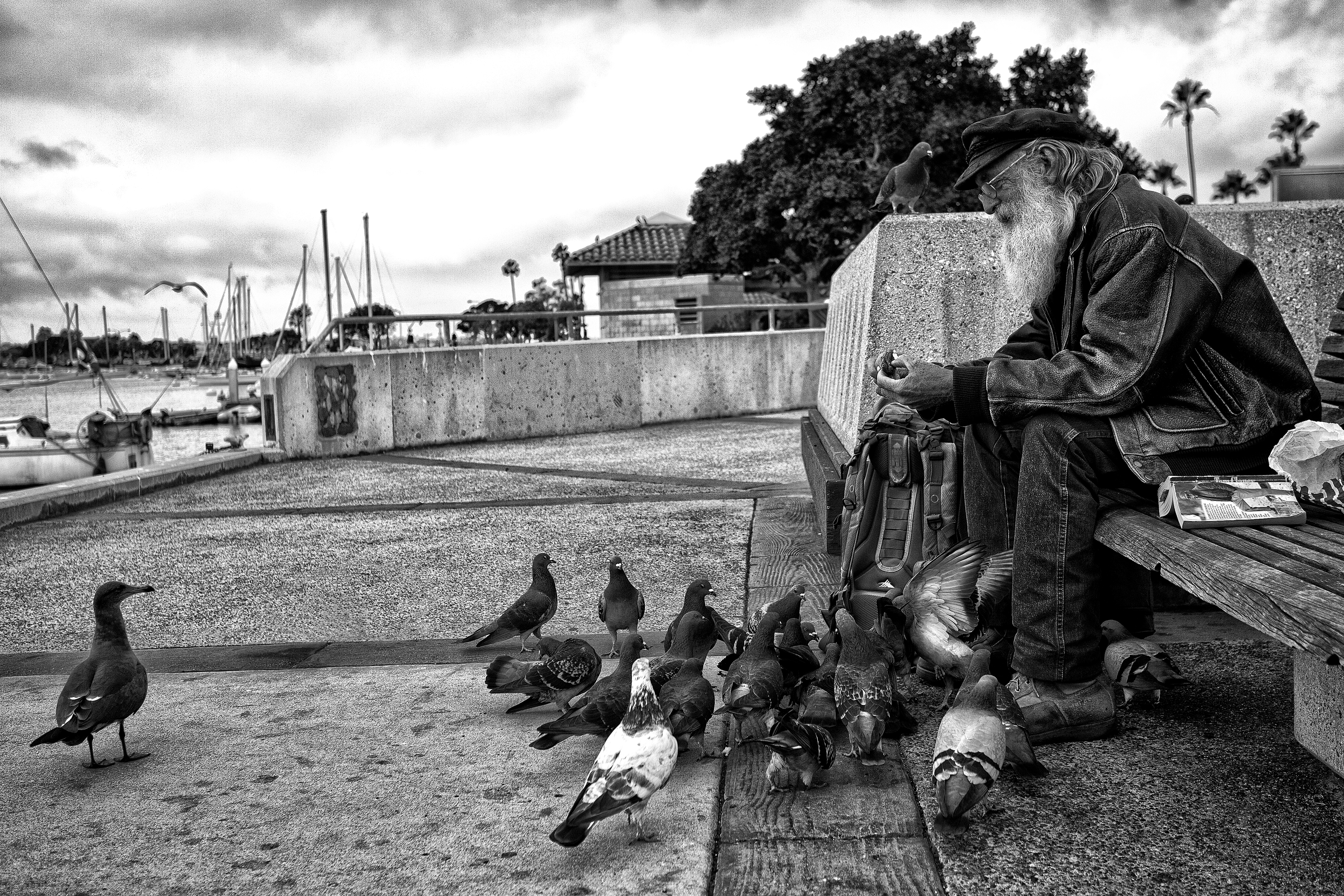 Feeding the Birds (B&W)