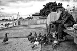 Feeding the Birds (B&W)