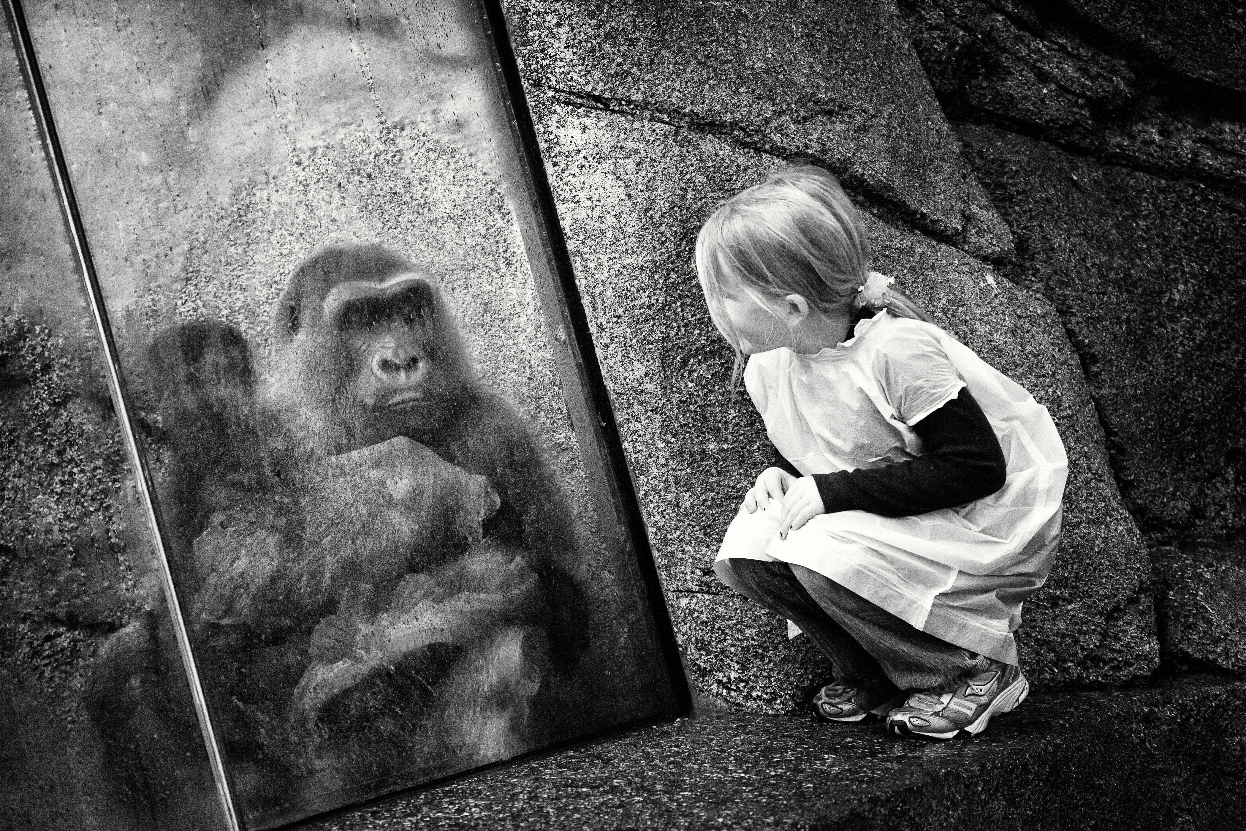 Little Girl and Gorilla