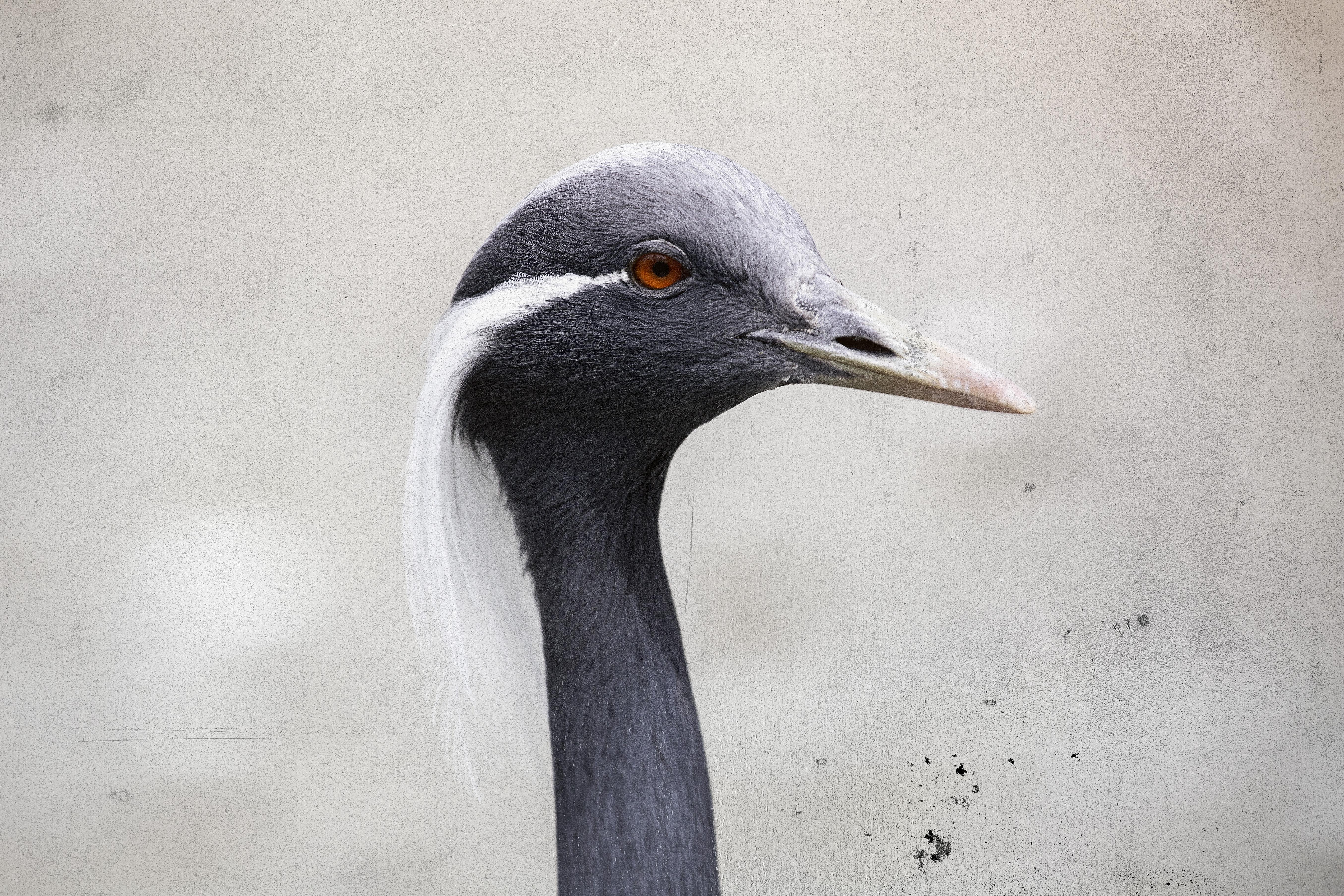 Fine Art Bird