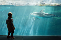 A Boy and His Dolphin