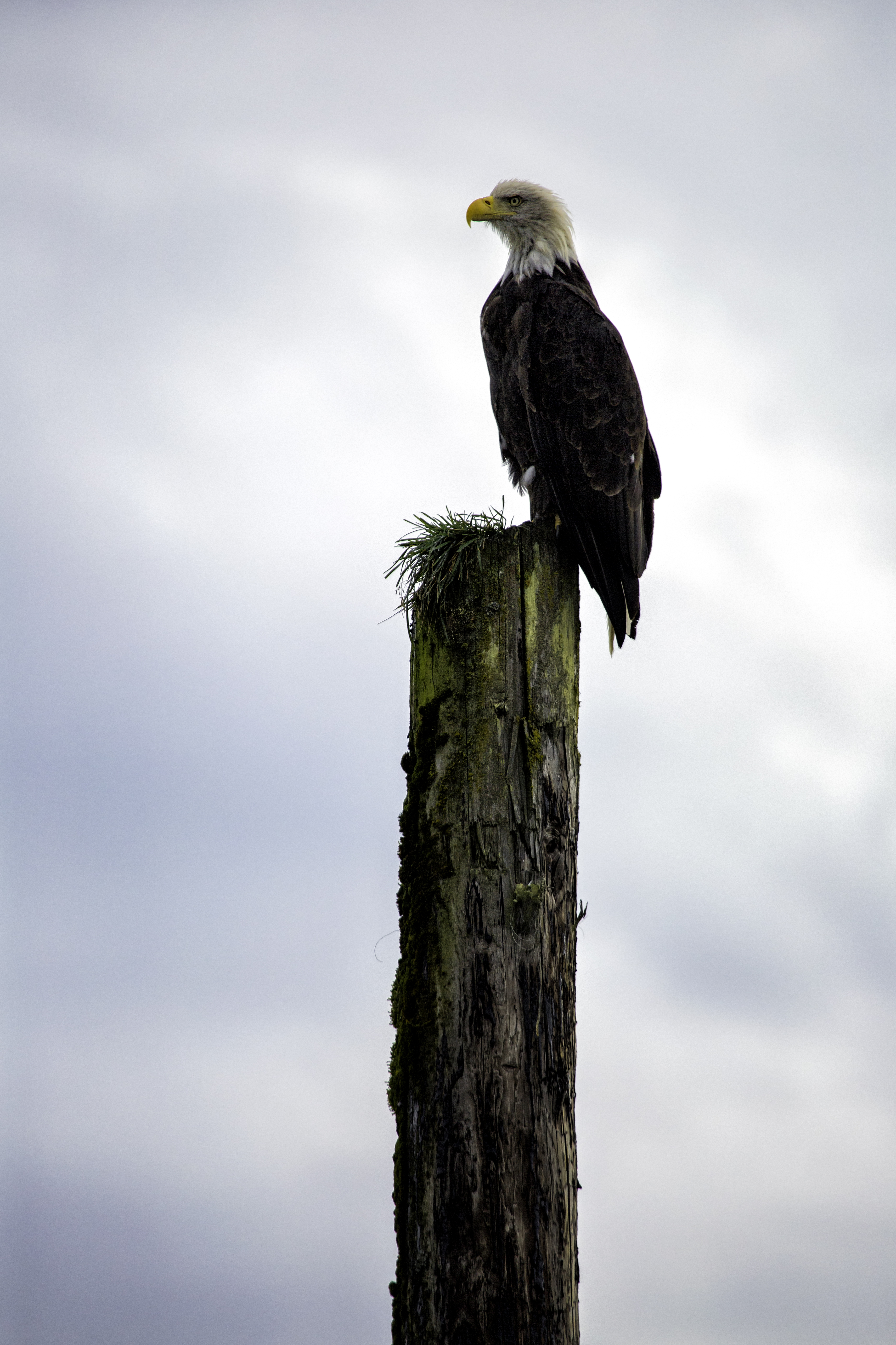 Eagle Perch