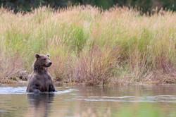 Bear Lookout (Wide)