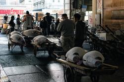 Fish Market Tuna Dealers