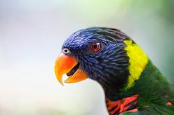 Parakeet Macro Profile #2