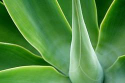 Green Plant 1