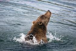 Brown Bear Uprising