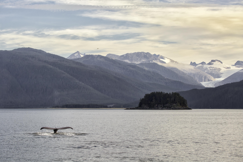 Juneau Landscape