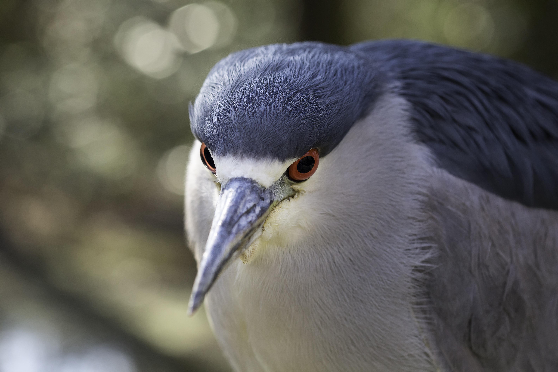 Myrtle Bird Stare