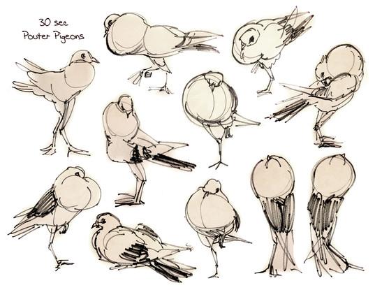 Fancy Pigeon Gestures